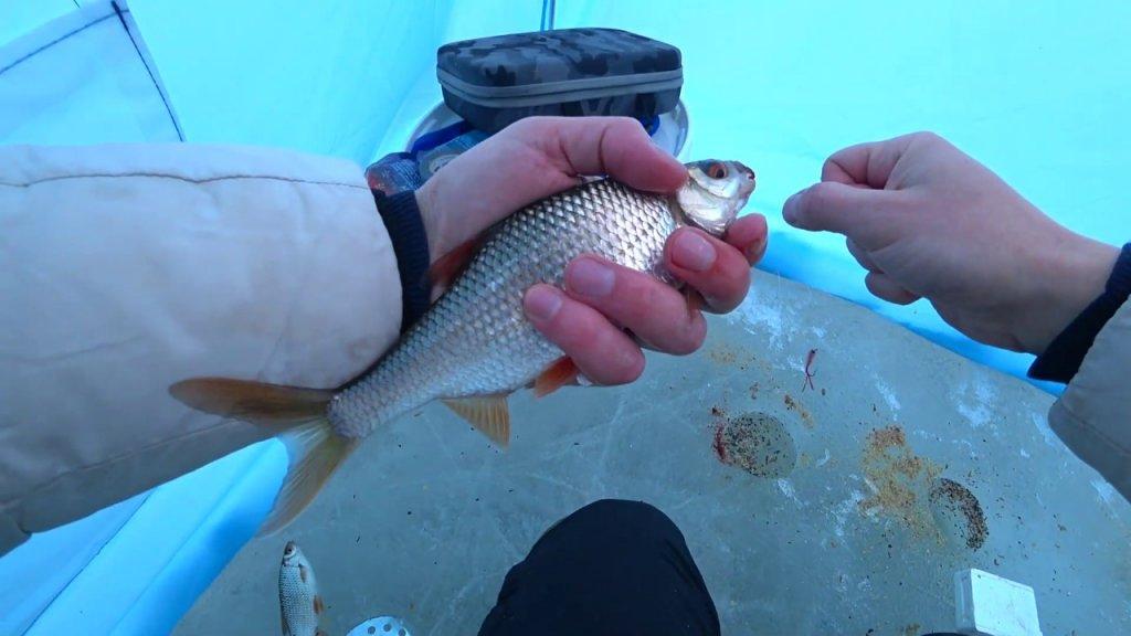 Труба, Шарыпово, Березовское Водохранилище, Плотва. Сорога.Зимняя Рыбалка 2020