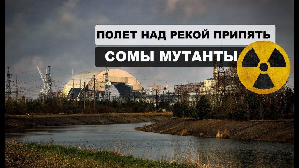Полет над рекой в Припяти. Сомы мутанты