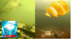 Кошачий корм или Цедра лимона? Реакция рыбы. Подводная съемка