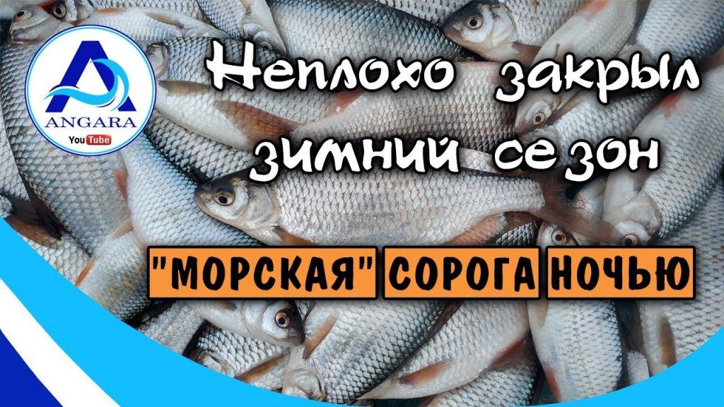 Рыбалка  Весенний жор морской сороги. Закрыл сезон