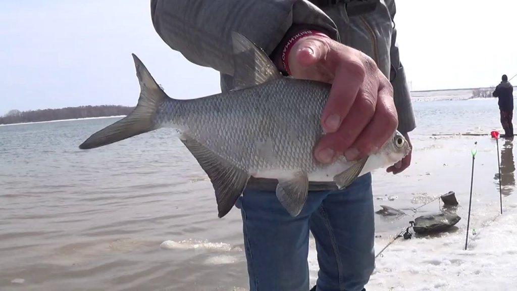 Фидер лещ рыбалка обь