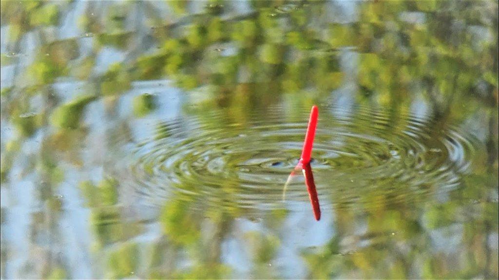 Ловля поплавочной удочкой весной. Секреты прикормки.