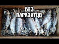 Как завялить рыбу. Сушеная Рыба