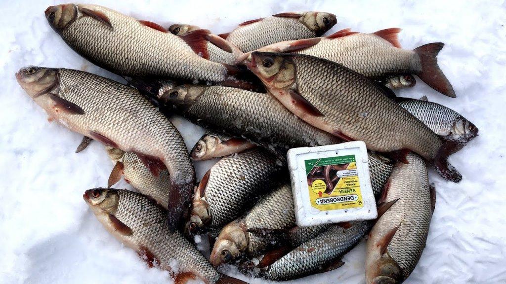 Ловля язя и подъязков на ЯМАЛе. Зимняя рыбалка 2020.