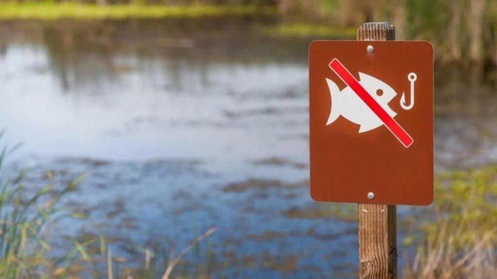 Нерестовый запрет на рыбалку в НСО 2020. Полный список ограничений