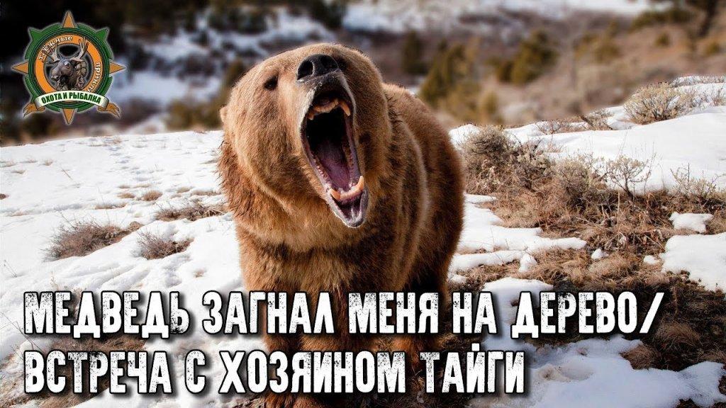 Встреча с хозяином тайги. Медведь загнал таёжного на дерево