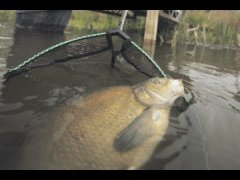 Рыбалка с ночевкой на дикой реке. Лещ на фидер и закидушки