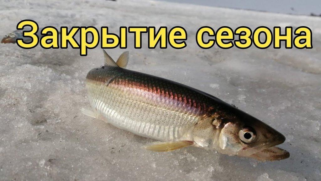 Закрытие сезона твердой воды. Сахалинская рыбалка.