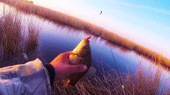 Придорожная канава оказалась полная рыбы. Оторвался по карасю на поплавочку.