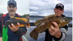 Рыбалка в Норвегии. Губан с причала, скумбрия с берега