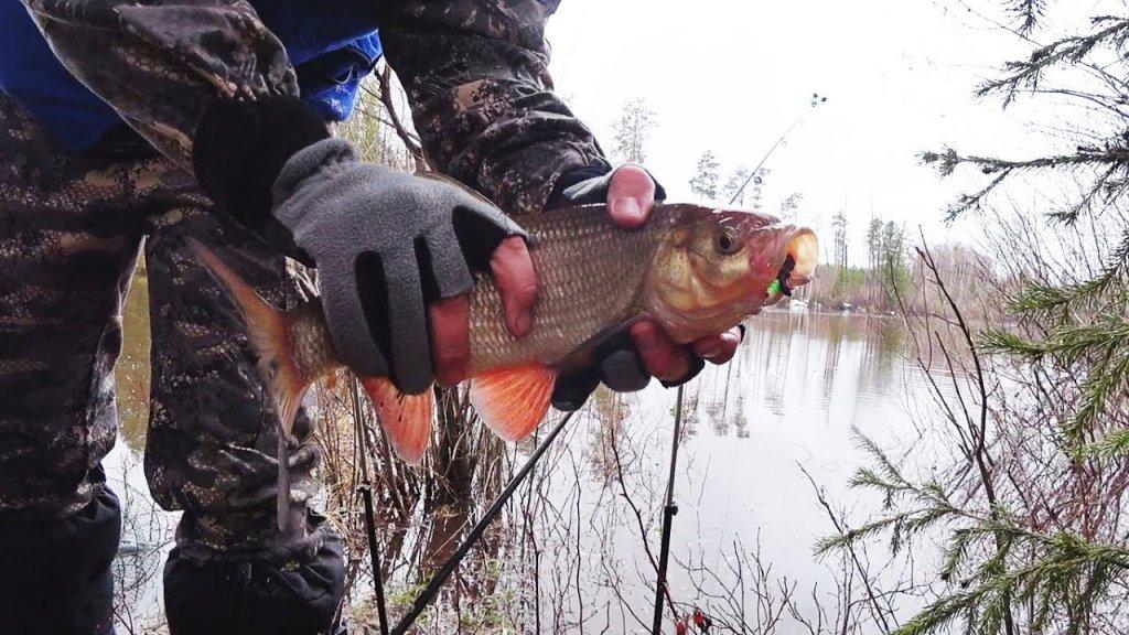 Язь вышел на кормежку после зимы. Хорошее открытие сезона жидкой воды. Весенняя рыбалка 2020.