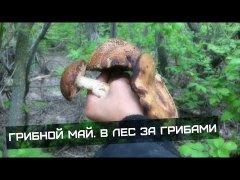 Поехал на рыбалку,но так и не поймал ни чего,за то на собирал грибов.. | грибной май 🌳