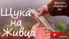 Щука на живца. Калужская и Московская области. Рыбалка на хищника. Щука на удочку.