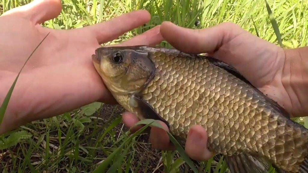 Рыбалка. КАРАСЬ дуреет от этой НАСАДКИ. Рыбалка на карася весной на удочку 2020