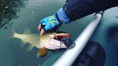 Рыбалка сплавом по реке. Щука и Окунь на спиннинг.