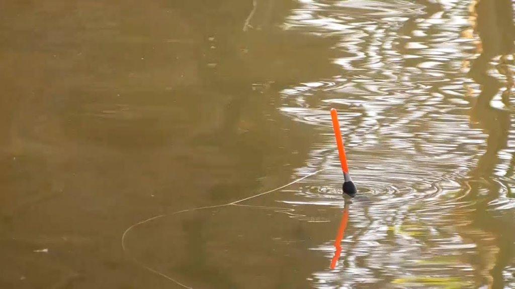 Активный клёв. Рыбы много. Рыбалка на поплавок. Поклёвки крупным планом