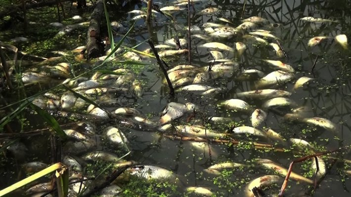 Стала известна причина замора рыбы в речке Тула. Ответ озвучили на совете депутатов Новосибирска