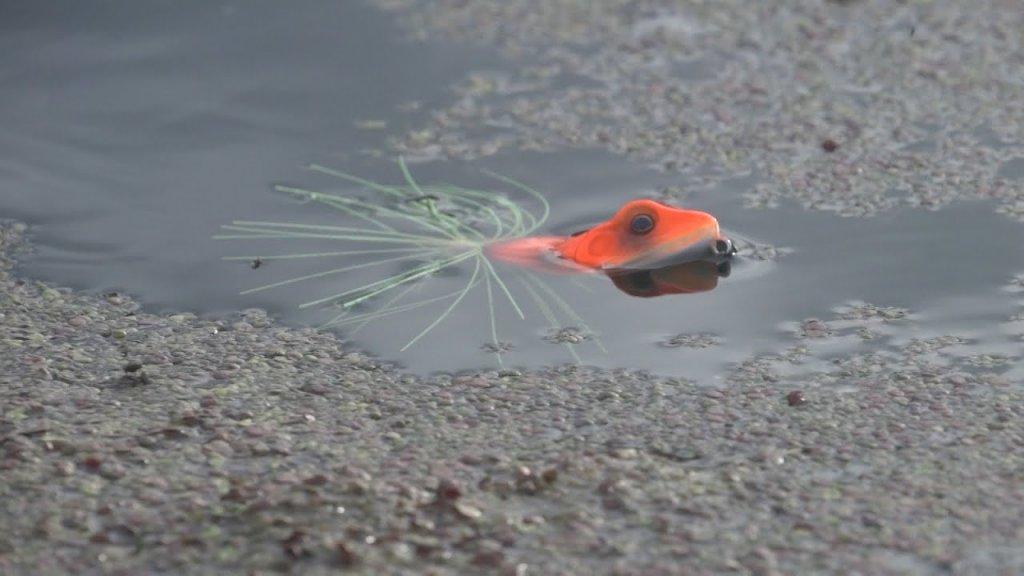 Щука берет лягушку. Спиннинг 2020