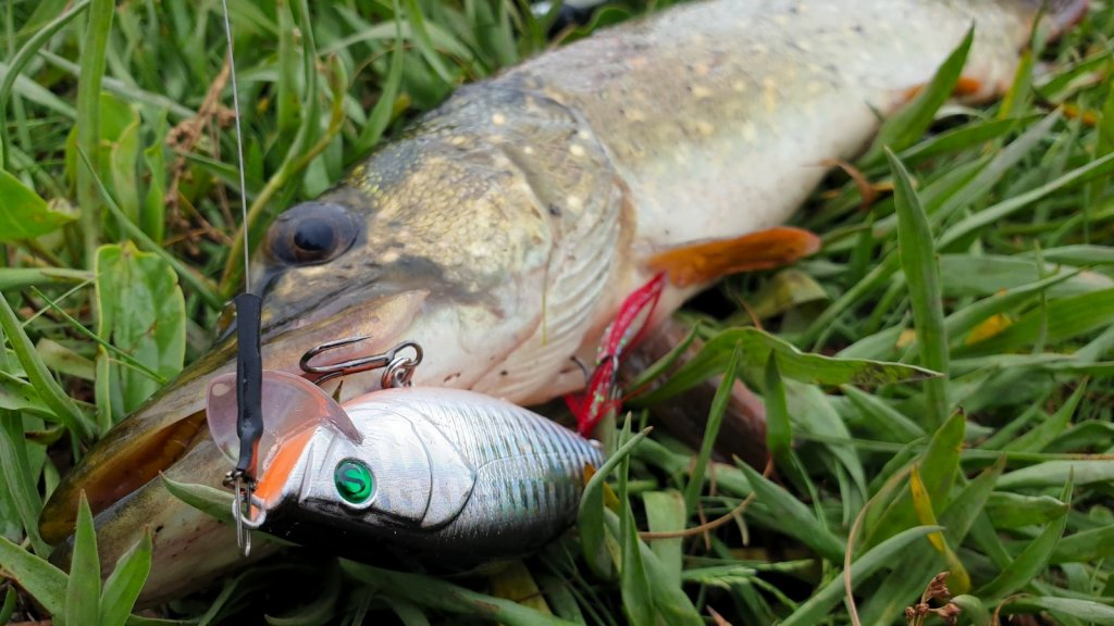 Спонтанно на рыбалку