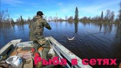Рыбалка на сети / наводнение / ищем землю.