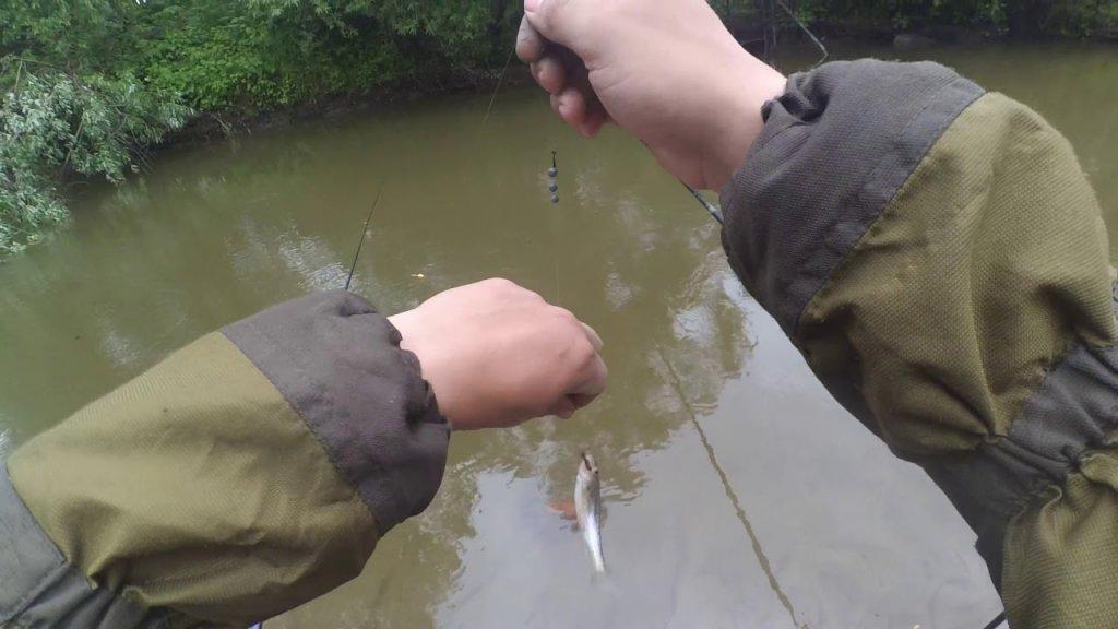 Барлак теперь как ручей.  Поймал рыбу из детства