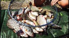 Рыбалка на ПОПЛАВОЧНУЮ УДОЧКУ против ловли на ФИДЕР. Карп, карась, плотва на ПОПЛАВОК.