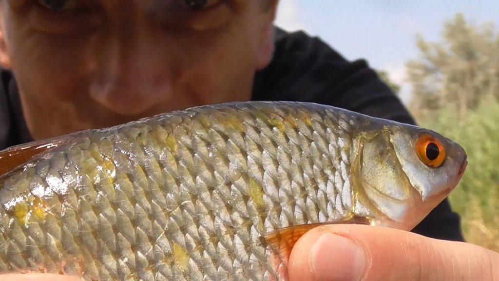 Рыбалка на поплавок. ТОП насадка для ловли плотвы на поплавочную удочку. Эксперимент с насадками.
