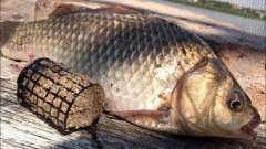 Фидерная рыбалка на карася | фидерная ловля карася на инлайн | фидер для начинающих | рыбалка 2020
