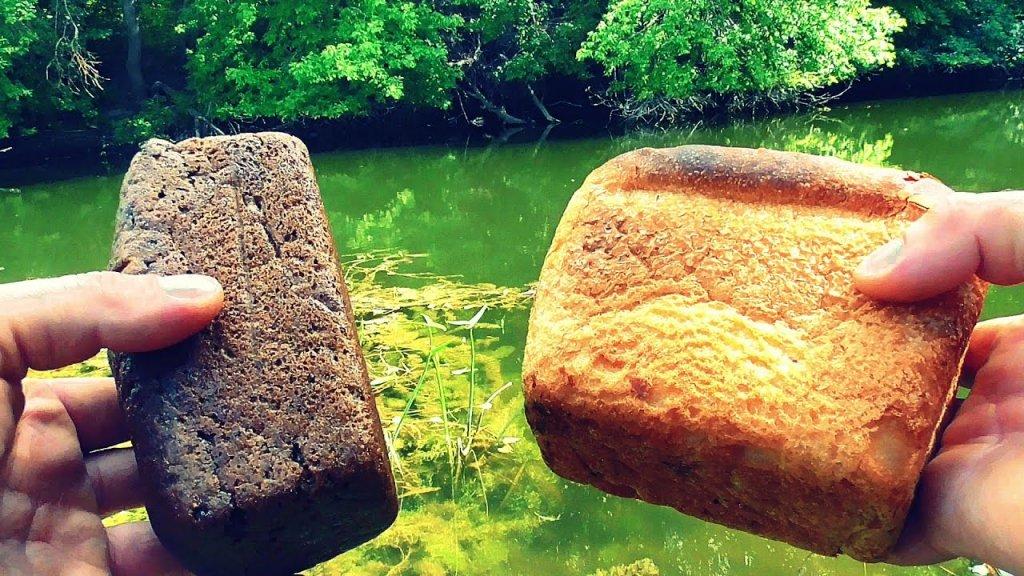 Белый (пшеничный) или Черный (ржаной) Хлеб? Реакция рыбы! Подводная съемка