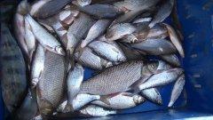 Едем на рыбалку по бездорожью, по большой воде за крупной рыбой.
