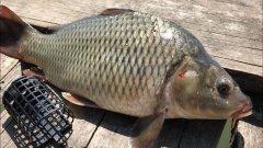 Ловля карпа на фидер | рыбалка на карпа и карася | рыбалка на фидер летом | ловля на фидер 2020