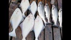 Рыбалка на лосося и палтуса