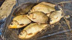 Ловля карася летом на фидер. Вкусный обед на рыбалке.