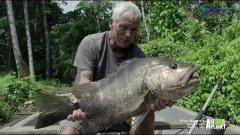 Черный окунь. Рыба которая весит более 100 кило