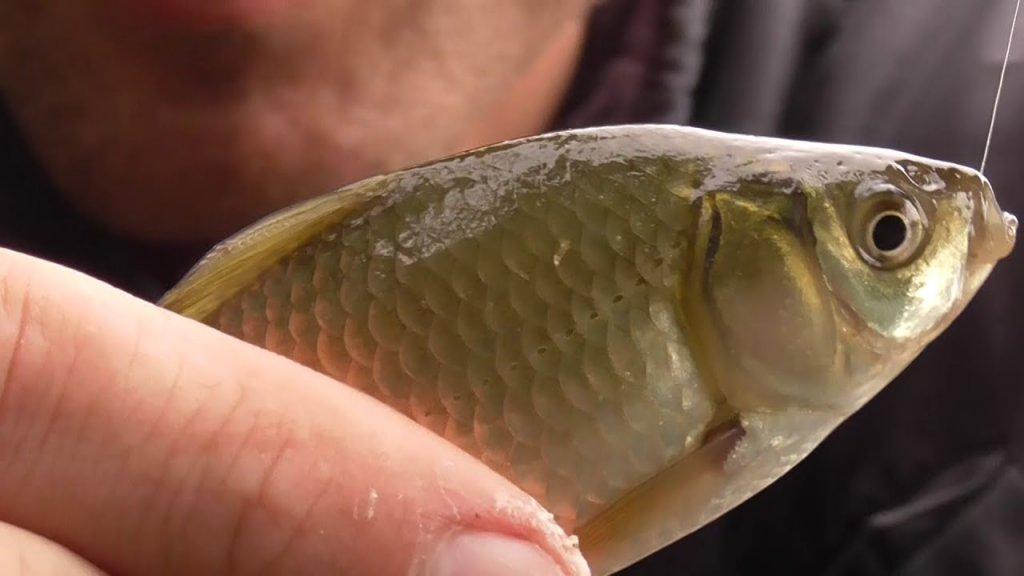 Рыбалка на поплавок летом 2020! Поклевки для души