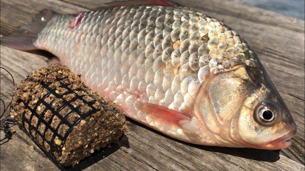 Рыбалка на донку | ловля  карася на донку | рыбалка на карася | как ловить на донку | рыбалка 2020