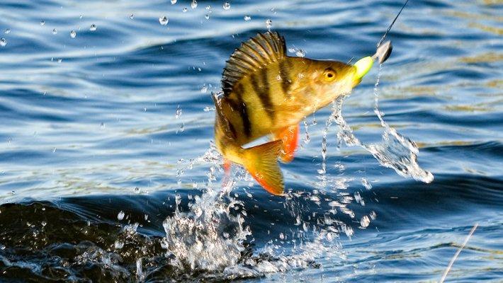 Фотоконкурс «Рыба моей мечты». Приз - лодка ПВХ