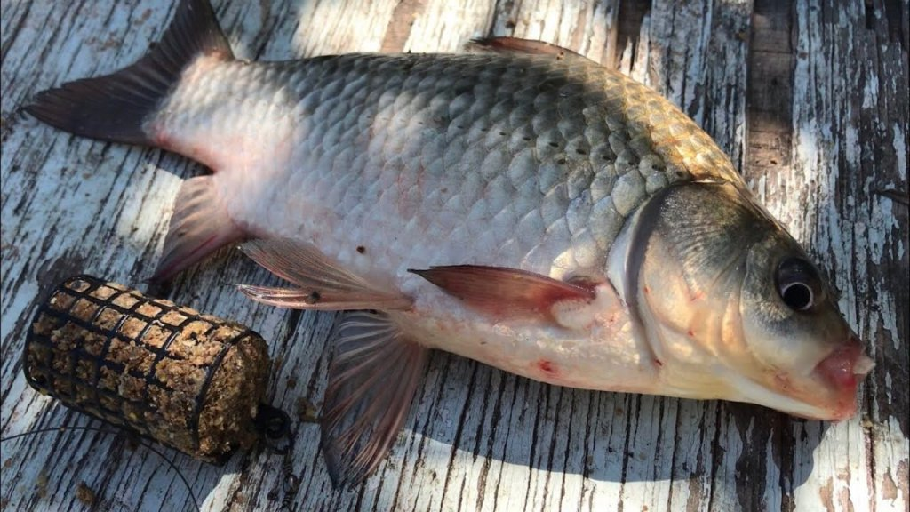 Рыбалка на фидер | фидерная рыбалка на карася | ловля на фидер | фидер для начинающих | рыбалка 2020