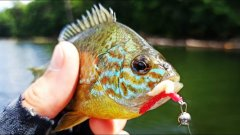 Эту снасть придумали БРАКОНЬЕРЫ! Рыбалка на микроджиг облавливает ПОПЛАВОЧНУЮ УДОЧКУ!