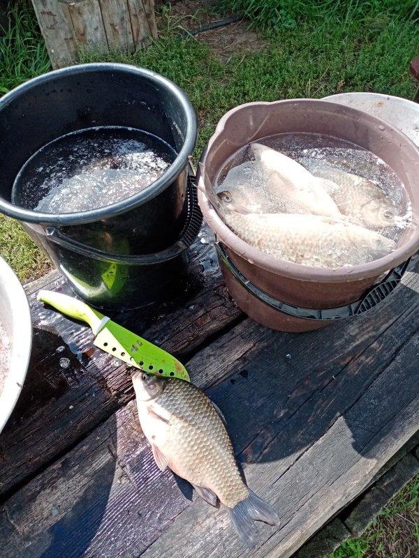 Подготовка рыбы к засолу.