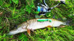 Поймал обещанную щуку и окуней на спиннинг!  микроджиг.  рыбалка летом 2020