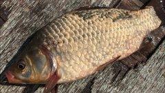 Фидерная рыбалка на карася | ловля карася на фидер | фидер для начинающих | рыбалка 2020