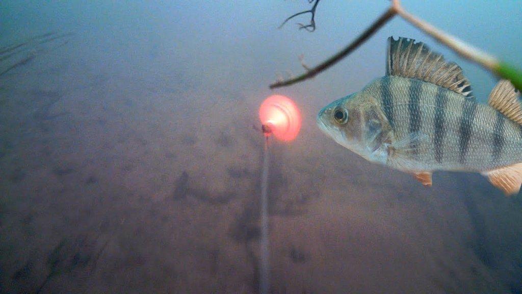 Рыбалка на Спиннинг с Подводными камерами. Ловля окуня