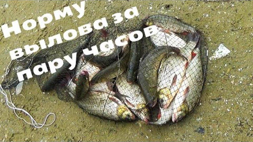 Рыба моей мечты - язь, здоровенный! Попал на жор крупняка | река обь.