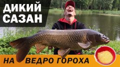 ОГРОМНЫЙ САЗАН на фидер, рыбалка с ночёвкой, выжидаем трофей