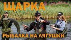 Ловля щуки на ЛЯГУШКУ НЕЗАЦЕПЛЯЙКА на щуку / рыбалка летом в траве на Щарке