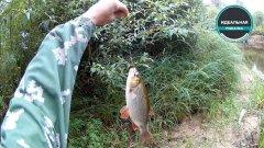 Рыбалка на лесной речке