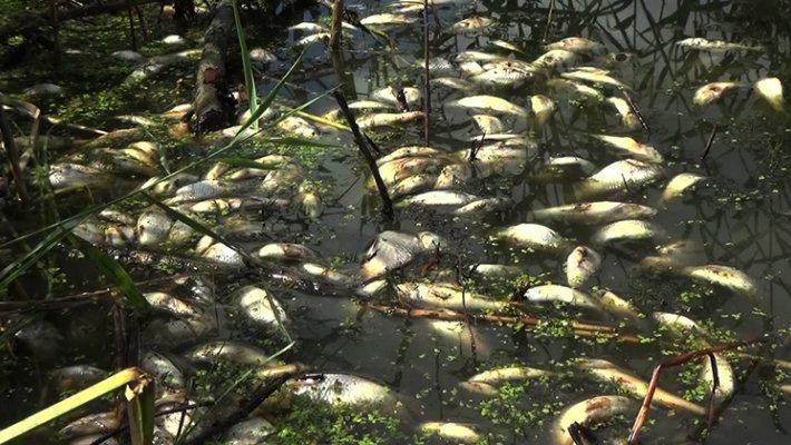 Свершилось. Нашли виновных в загрязнении реки Тулы
