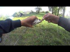 Рыбалка в Сентябре на Фидер | Рыбалка на реке ПРИПЯТЬ