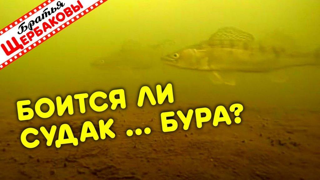 Реакция СТАЙНЫХ СУДАКОВ на ШУМ БУРА! Эксперимент как бы глупый, но интересный! ) Зимняя рыбалка